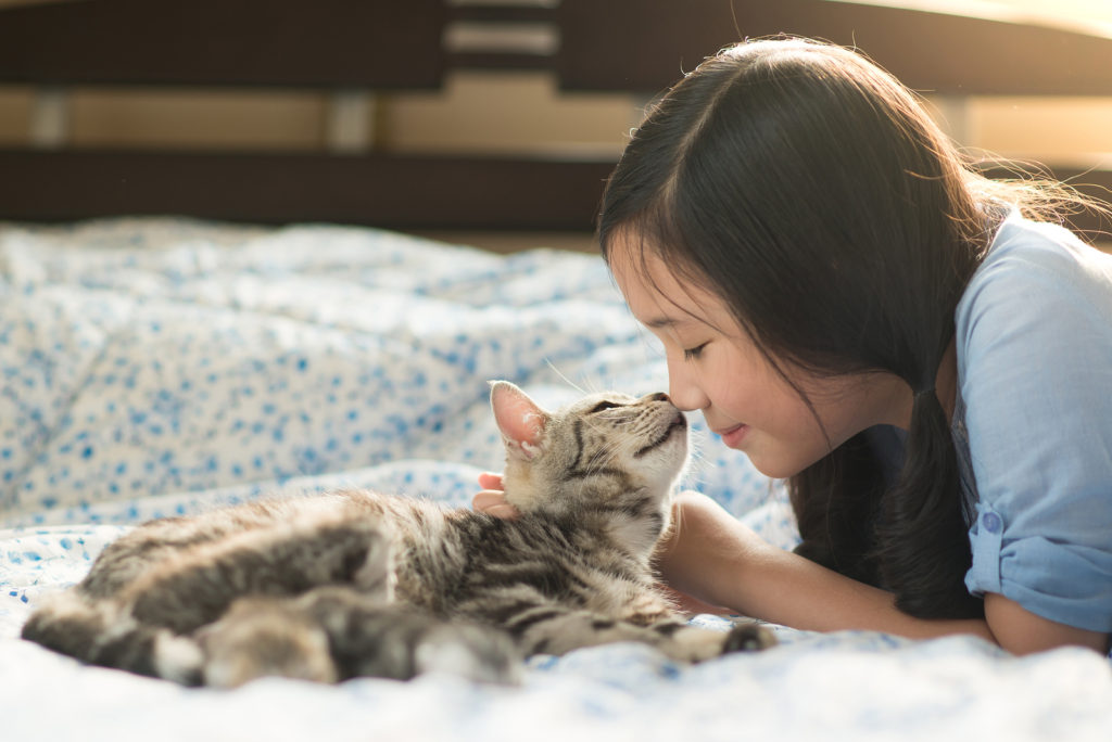Are American Shorthair Cats Good With Children?